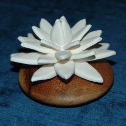 Scenting Clay Water Lily